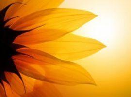 Corso di counseling a mediazione corporea ad indirizzo umanistico-bioenergetico