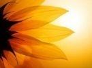 Corso di counseling a mediazione corporea ad indir