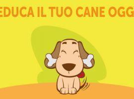 Addestramento Cani: Educa il Tuo Cane Oggi
