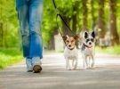 Corso per dog sitter professionale