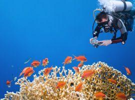 Corsi subacquei - PADI seal team