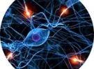 Corso di il sistema nervoso secondo la biologia, la medicin
