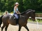 Corso di singola lezione di equitazione per adulti e bambin