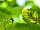 Corso di vita vegetale: un mondo di variazioni