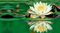 lotus olistica